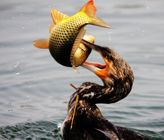 фото сайт для рыбаков